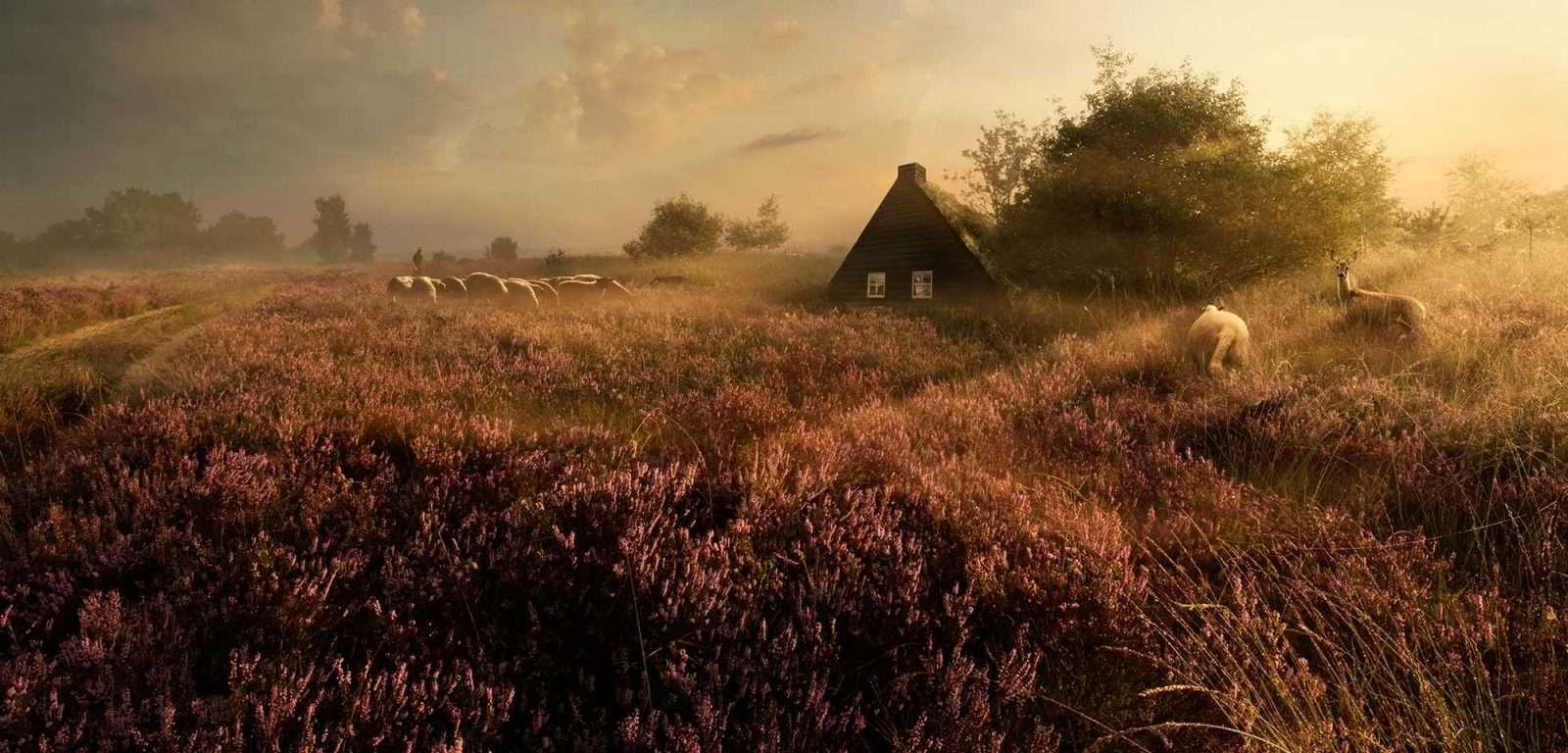 Drentse Heide | Oude tijden herleven